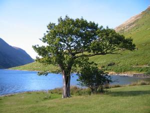 Stream_Tree
